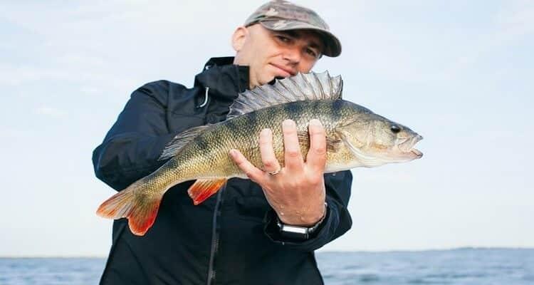pêcher à la balle de la pêrche